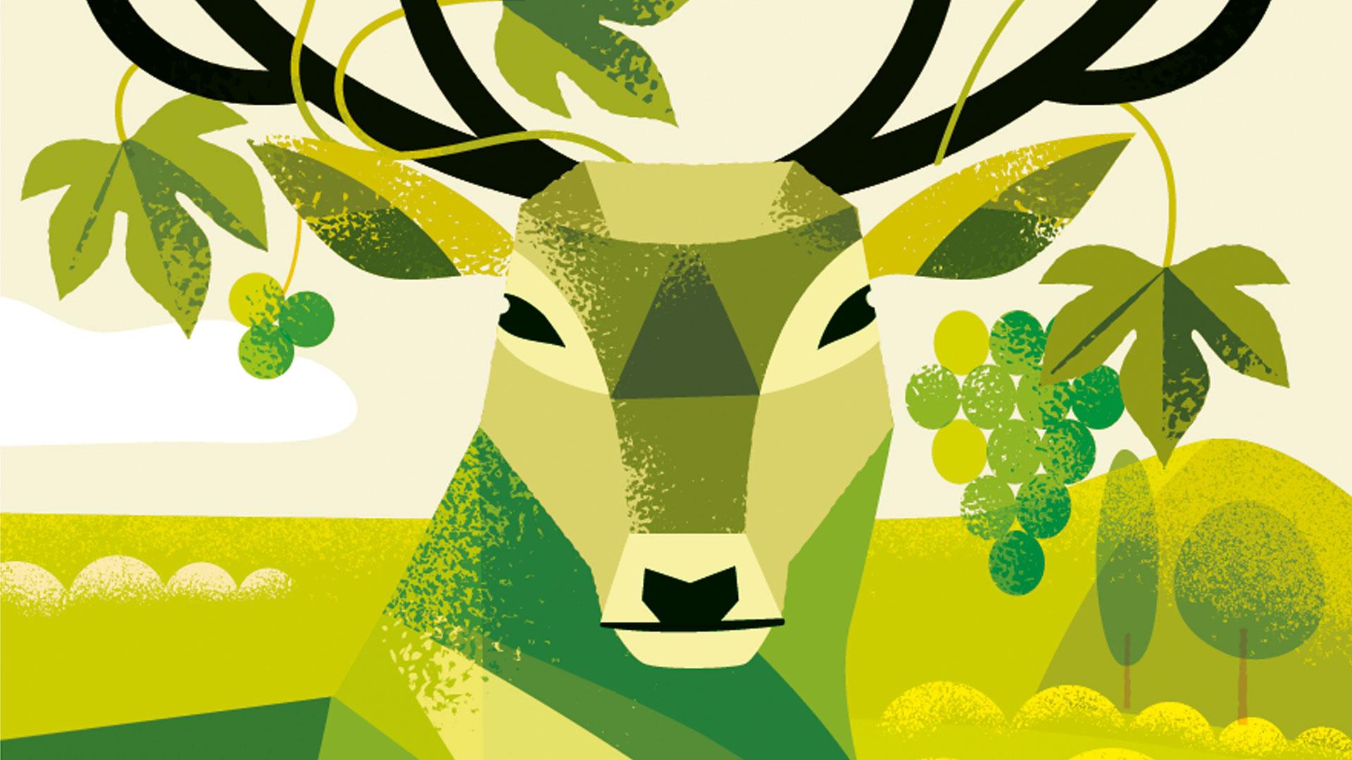 solaris-witte-wijn-wijngaard-zuid-veluwe